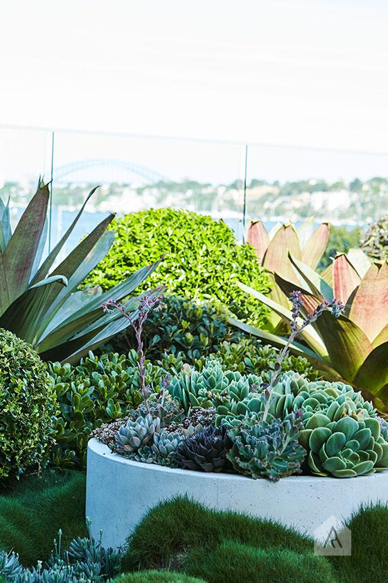 © Adam Robinson Design Sydney Outdoor Design and Styling Landscape Drummoyne Garden 07.jpg