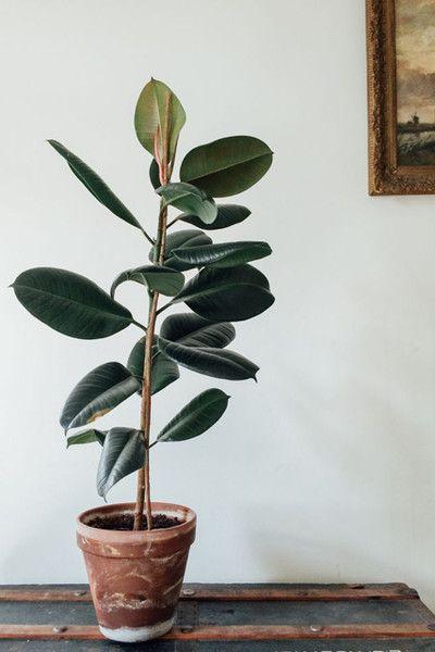 Adam Robinson Design Plants Are Nature's Air Freshener 01.jpg