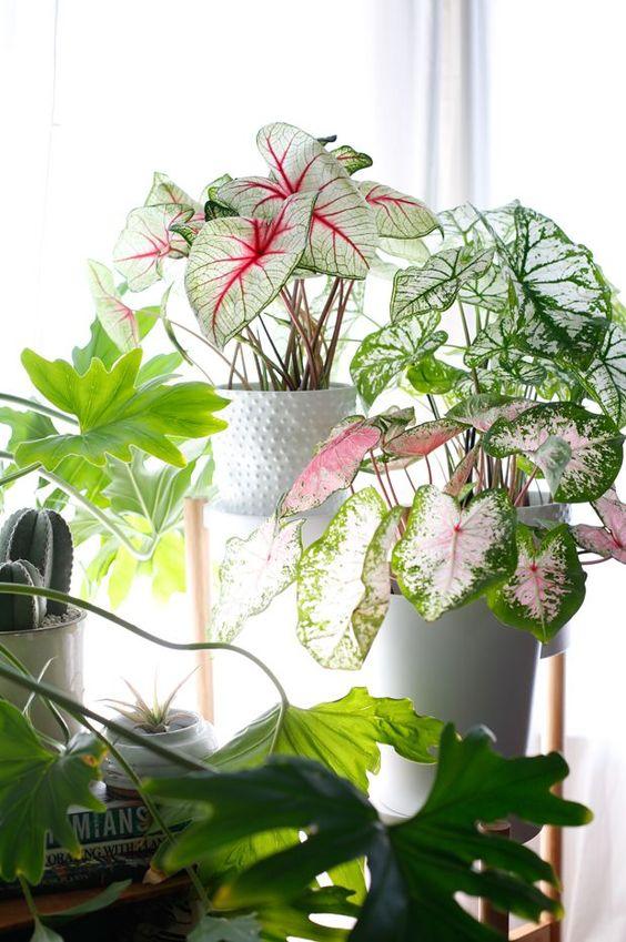 Adam Robinson Design Plants Are Nature's Air Freshener 06.jpg