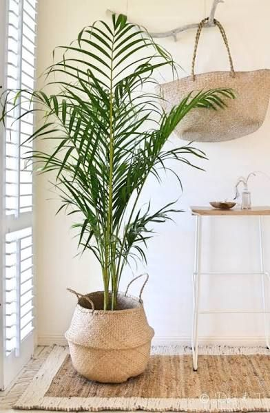 Adam Robinson Design Plants Are Nature's Air Freshener 07.jpg