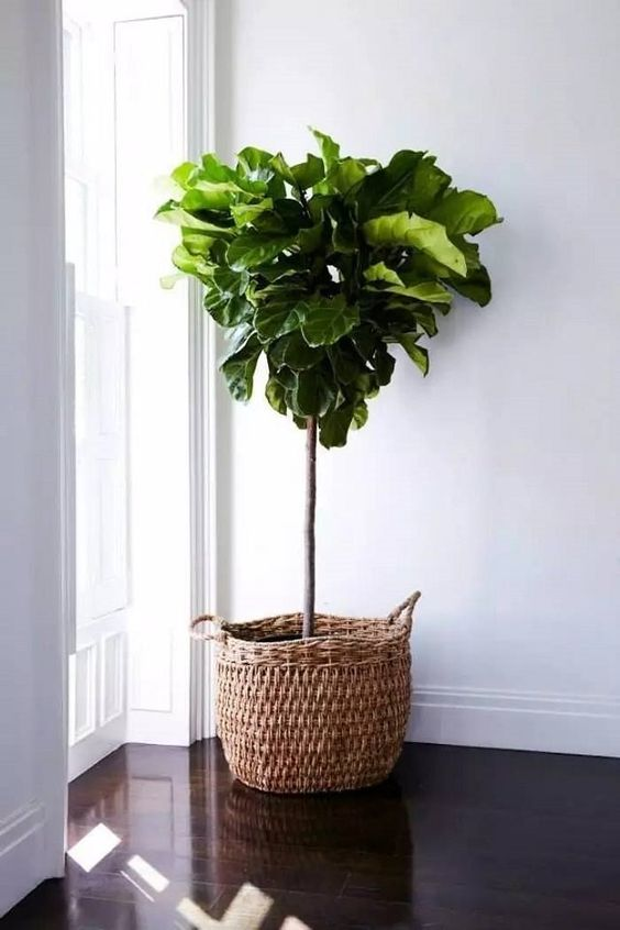 Adam Robinson Design Plants Are Nature's Air Freshener 03.jpg