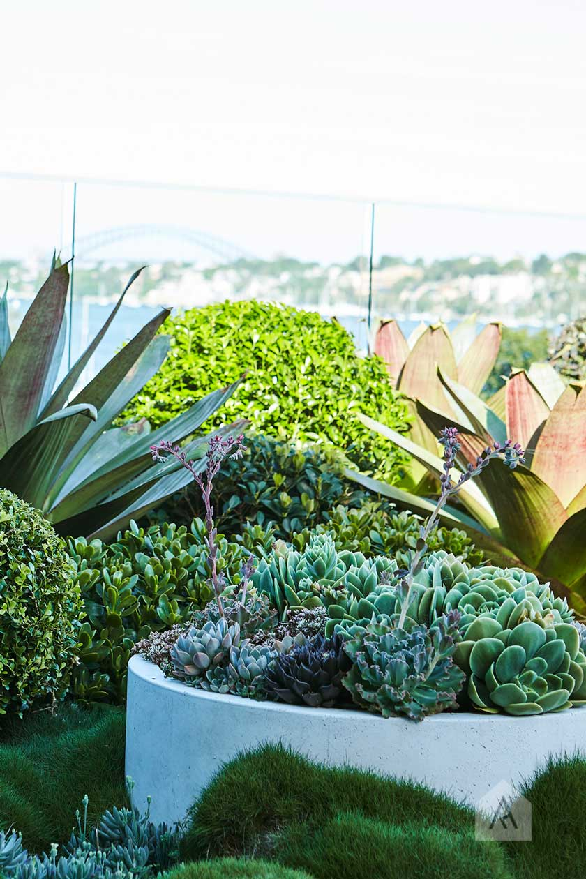 The planting shapes and forms will create points of interest and layering. Image from our  Drummoyne rooftop and balcony garden project