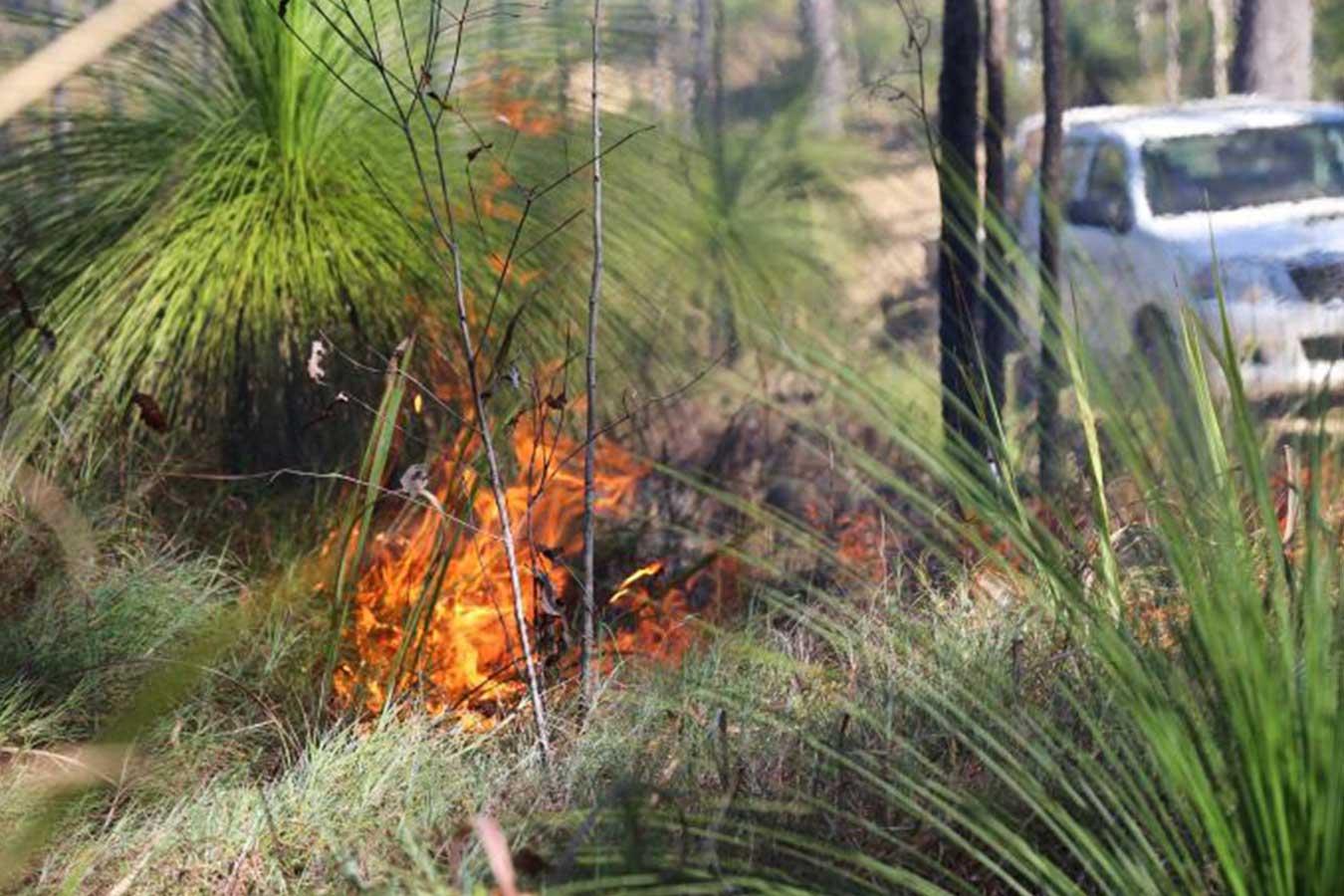 Photo: Lyndal Scobell, Cape York NRM