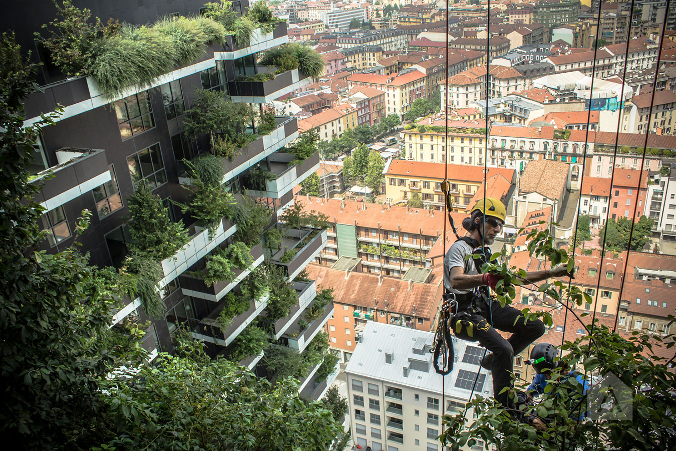 © Adam Robinson Design Sydney Urban Forestry A World First Event.jpg