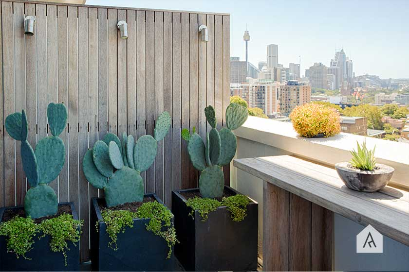 ©-Adam-Robinson-Design-Sydney-Outdoor-Design-Styling-Rooftop-Balcony-Gardens-Darlinghurst-01.jpg