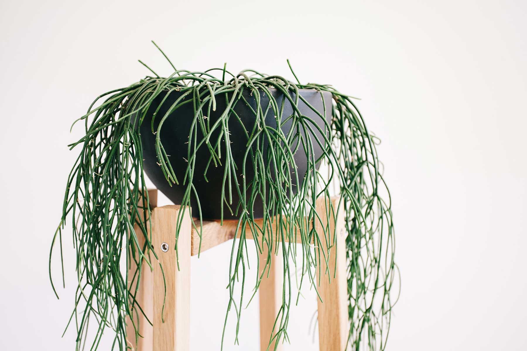 ©-Adam-Robinson-Design-Timber-Plant-Stand-02.jpg