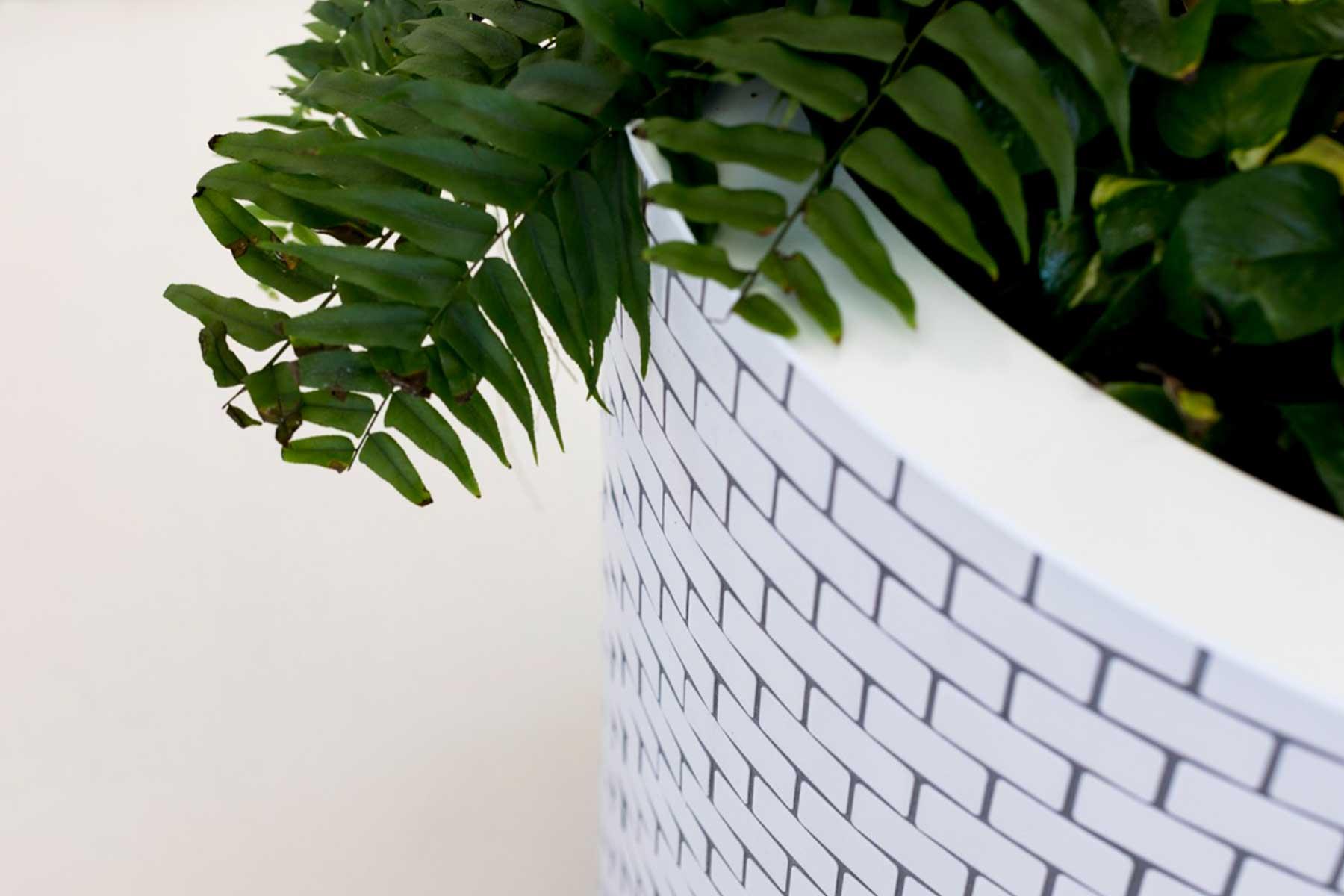 ©-Adam-Robinson-Design-Accent-Plants-08.jpg