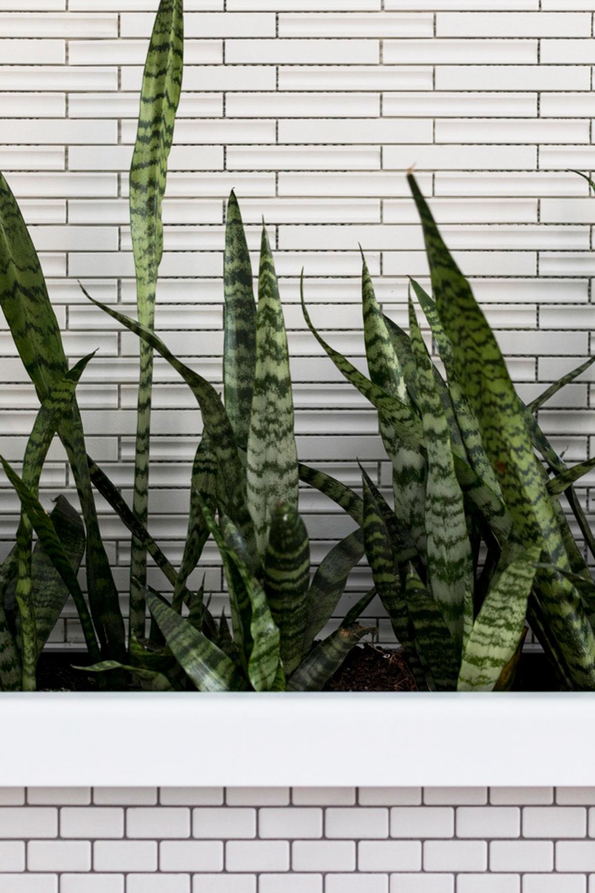 ©-Adam-Robinson-Design-Accent-Plants-16.jpg