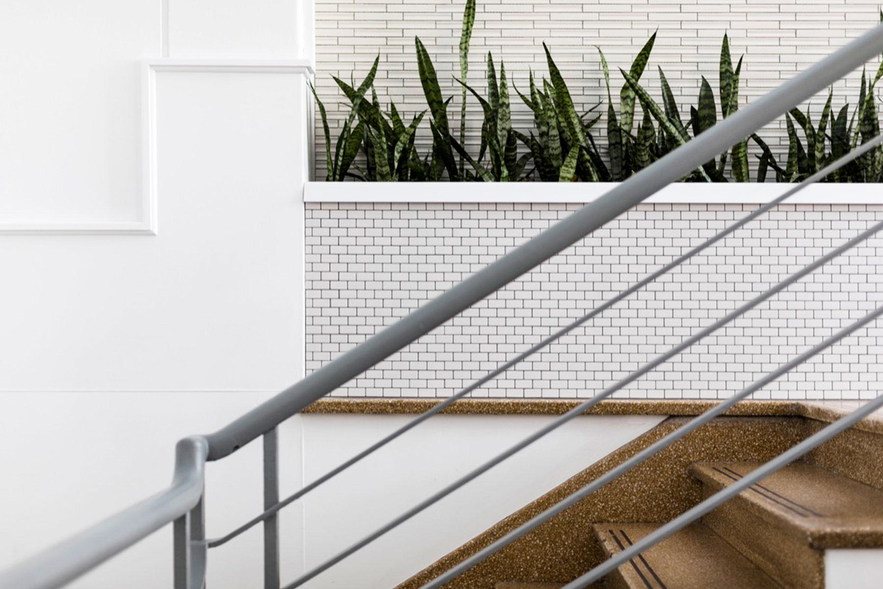 ©-Adam-Robinson-Design-Accent-Plants-06.jpg