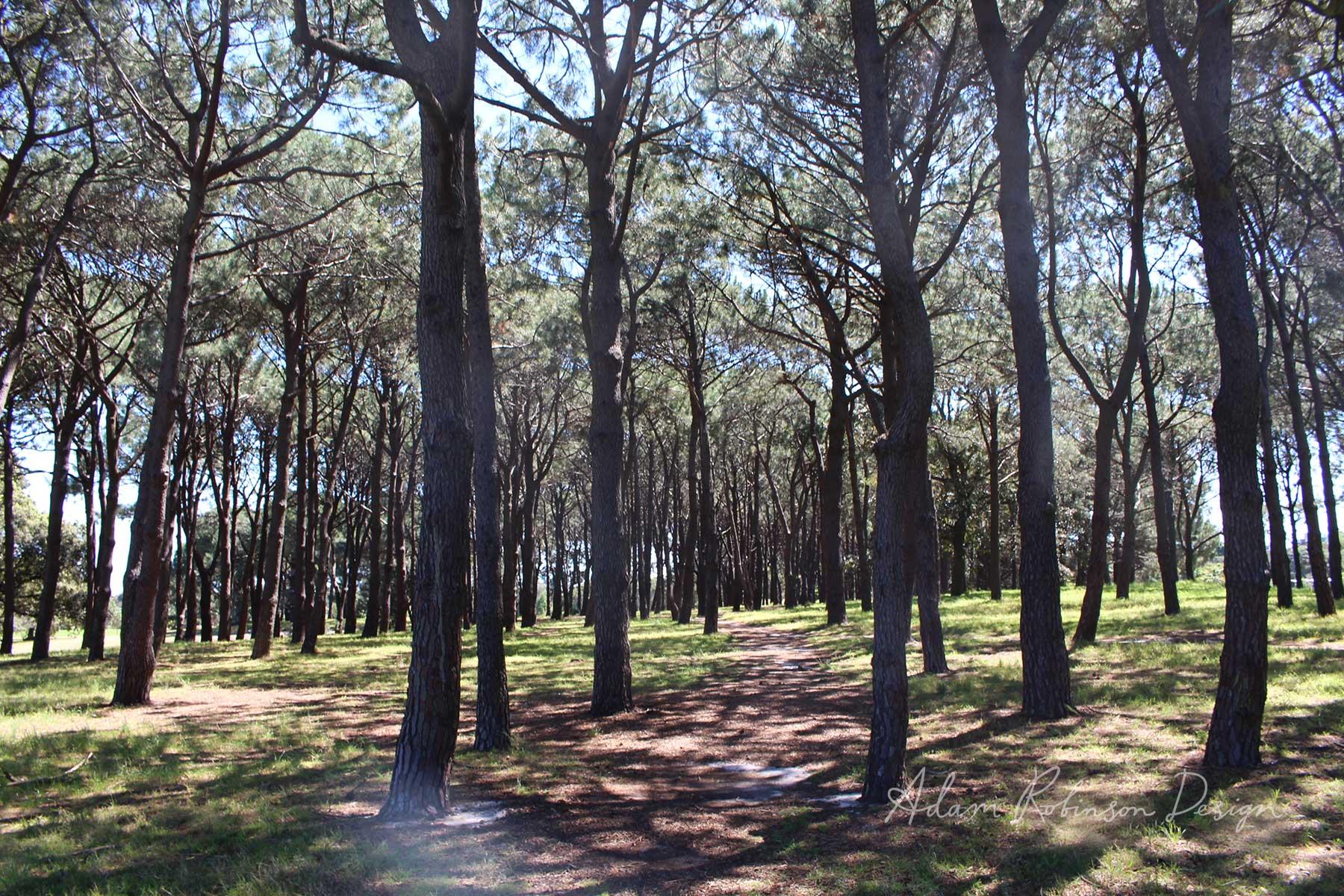 ©-Adam-Robinson-Design-Nurture-Your-Nature-Sydney's-First-Annual-Forest-Bathing-Event-01.jpg