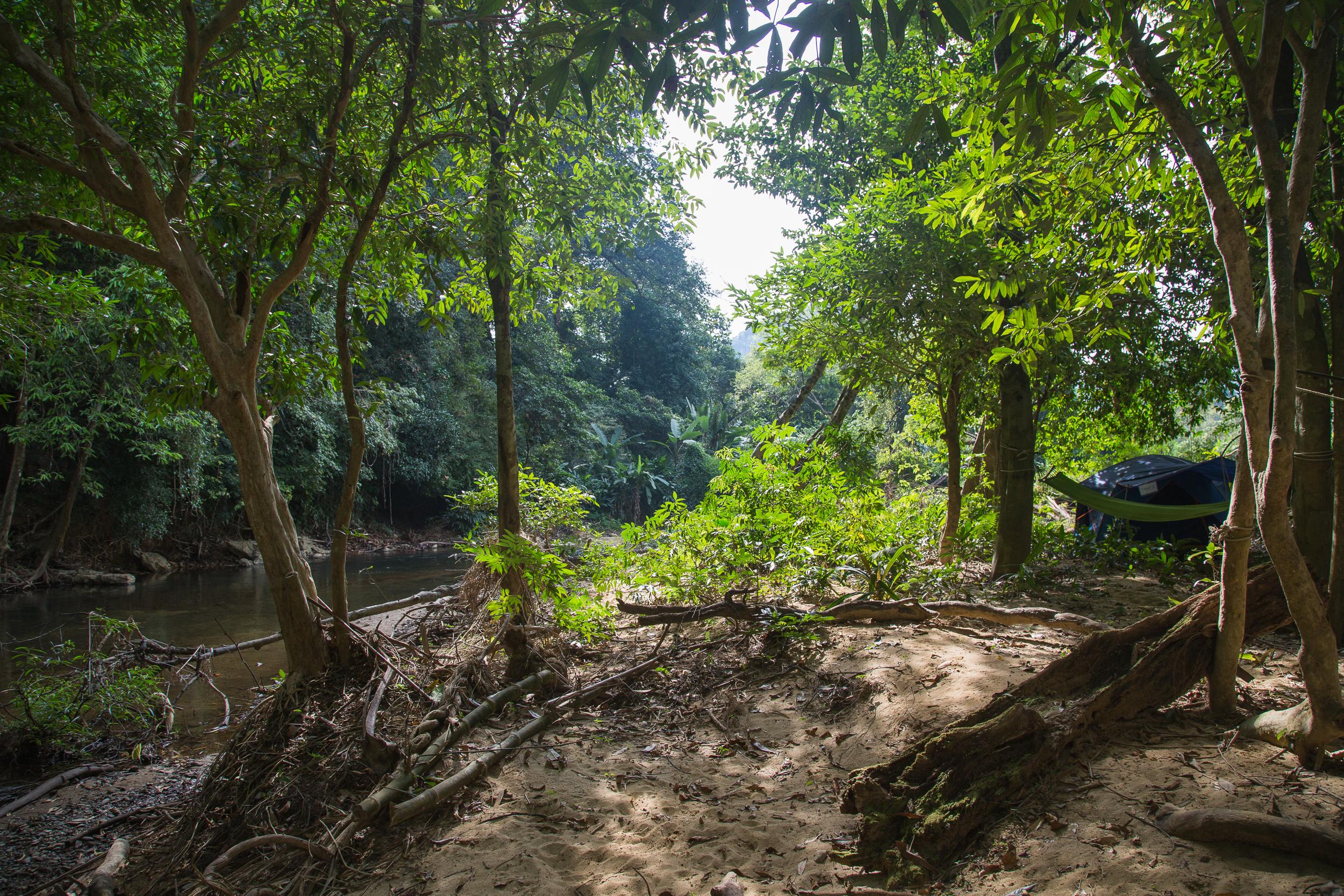 Sunshine peeks through the rainforest canopies.