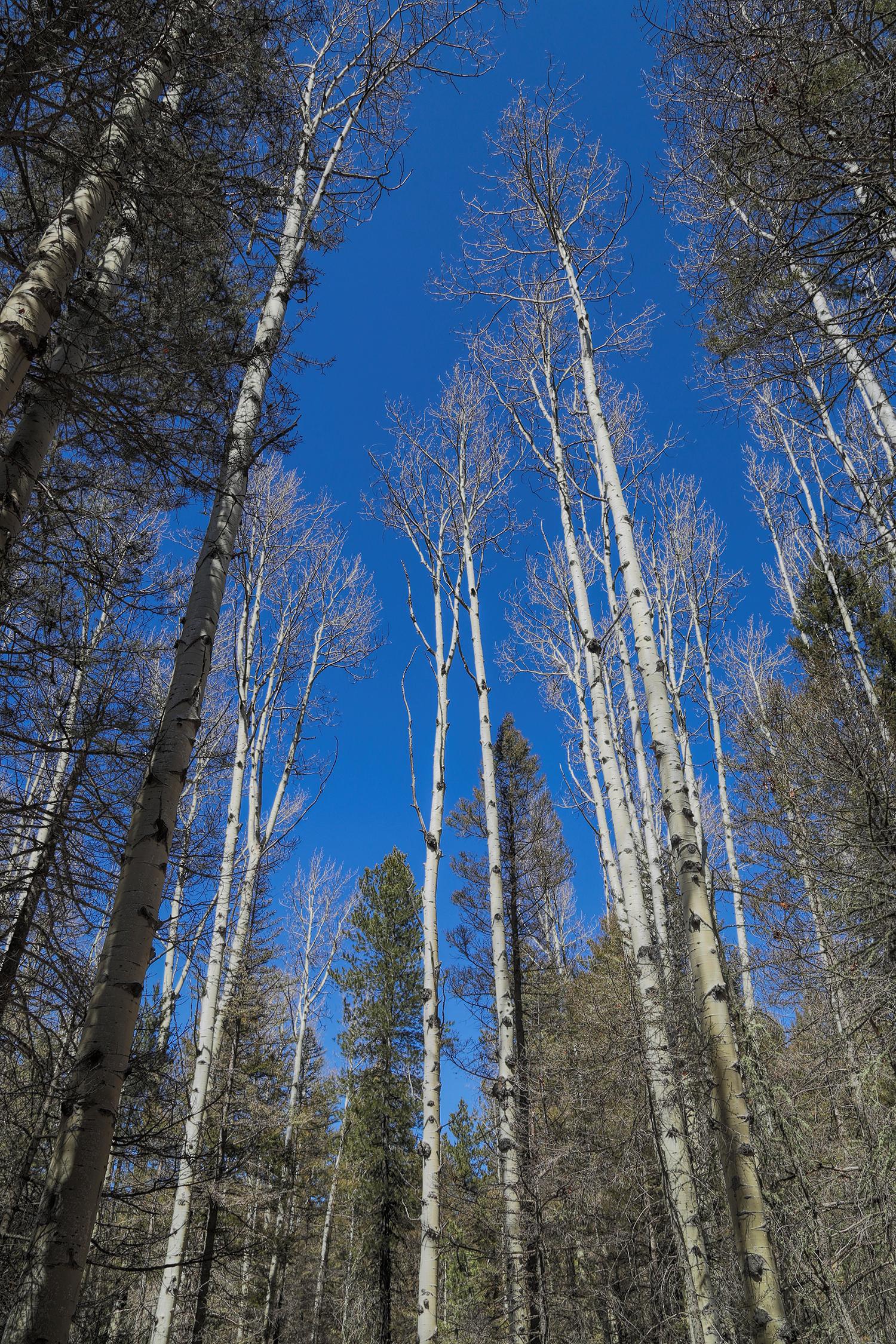 santa-fe-national-forest.jpg