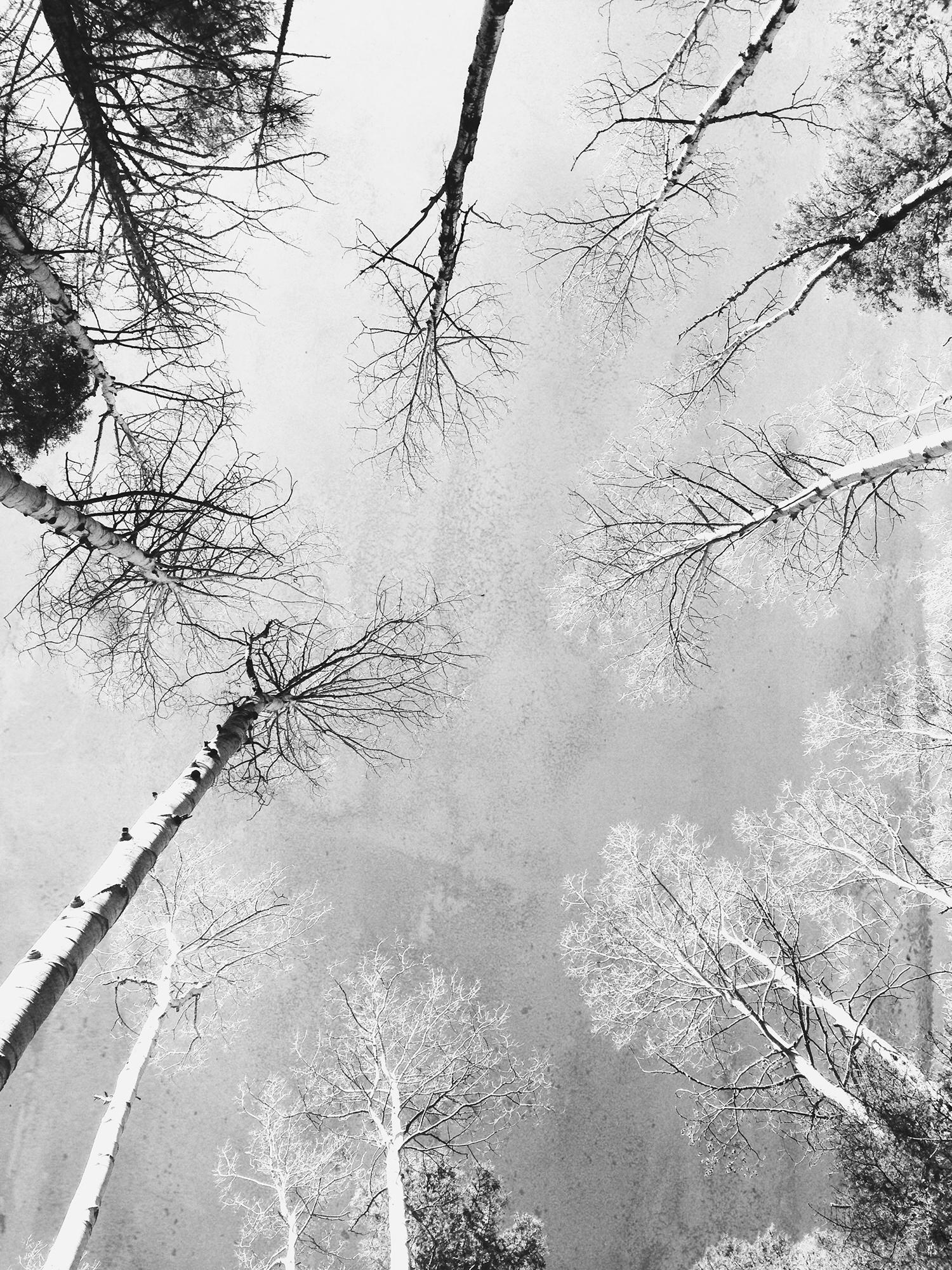 santa-fe-national-forest-2.jpg