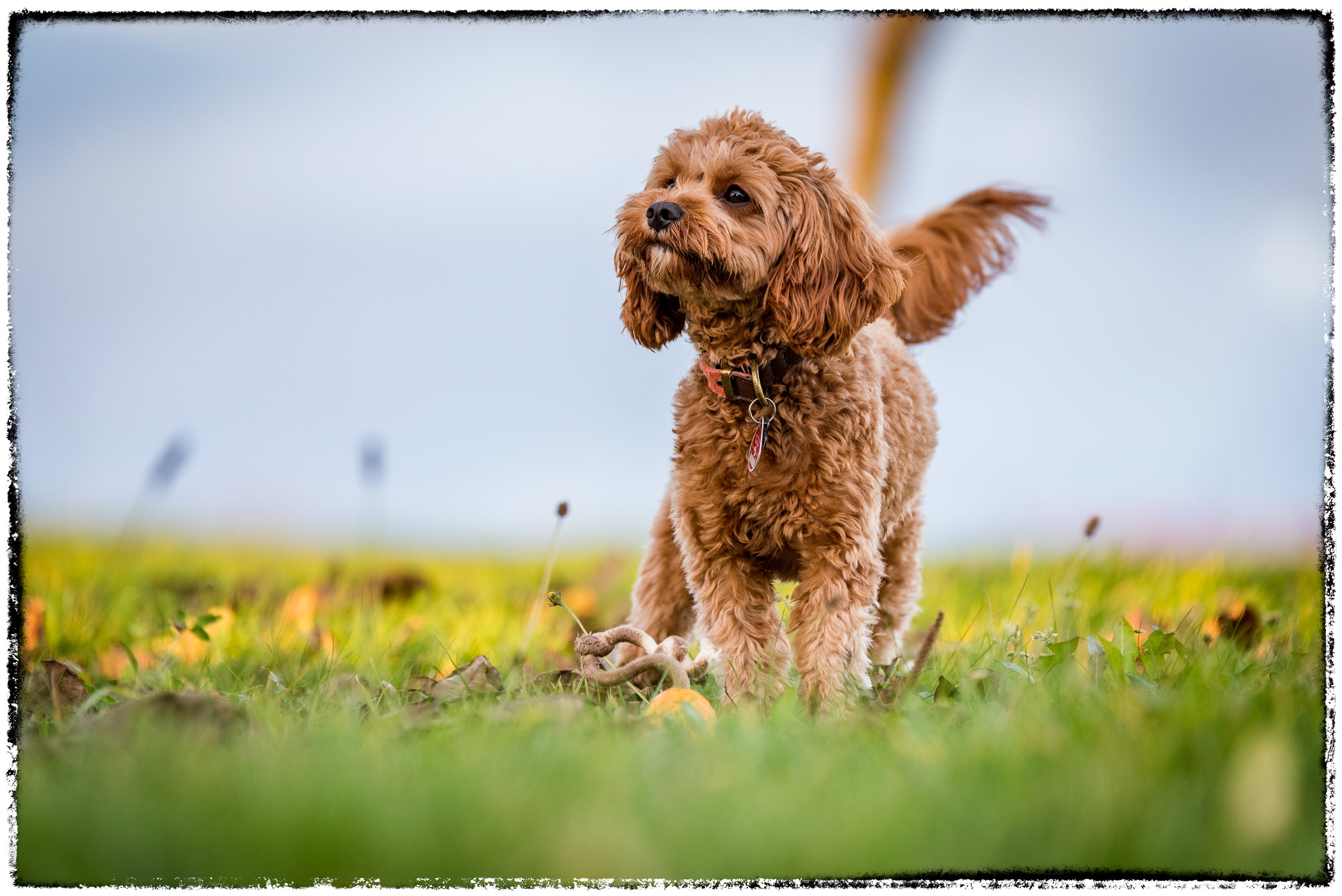 Dog_0016.jpg