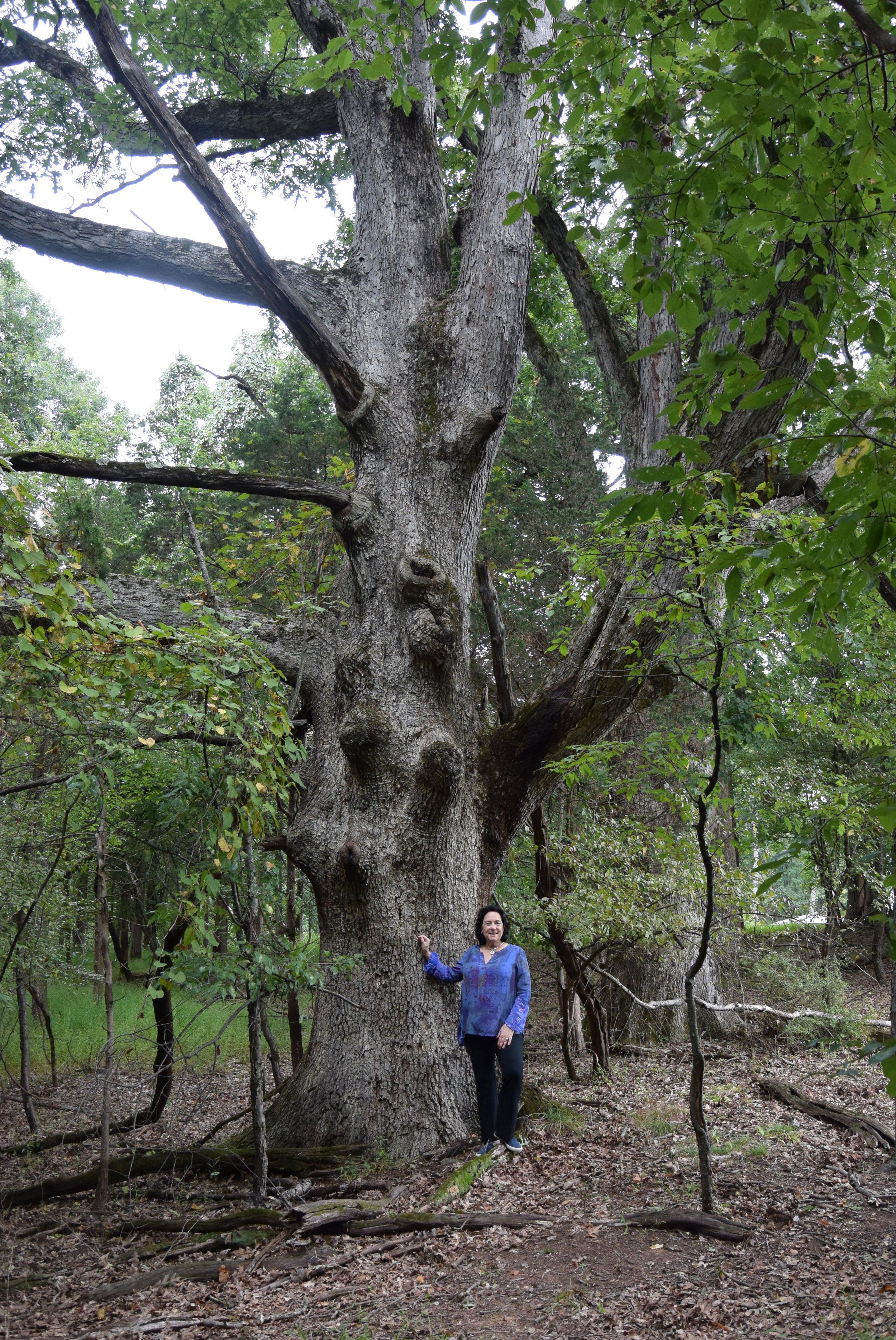 Liz tree RVCC final.jpg