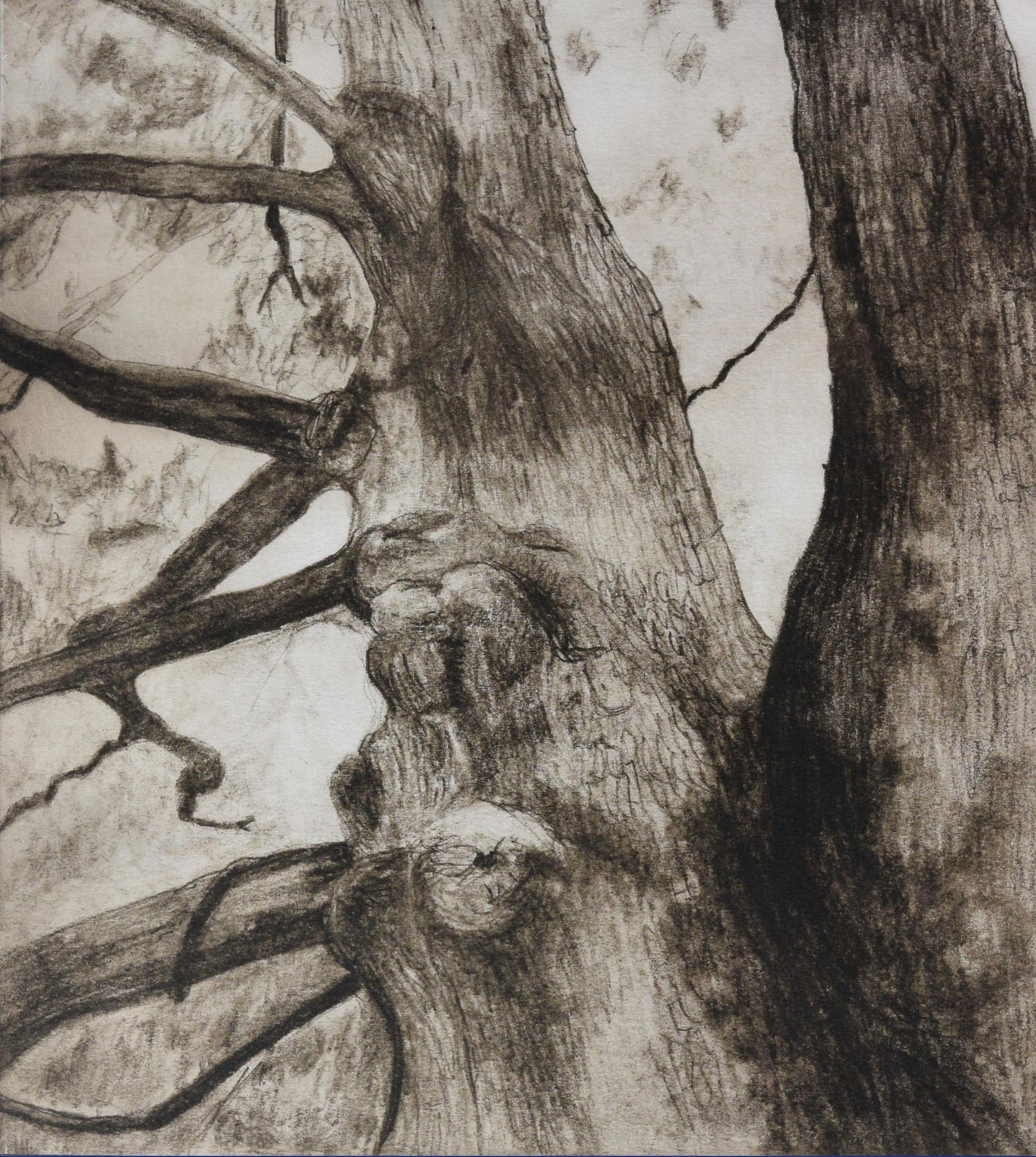 Liz Mitchell The Noble Oak intaglio printmaking 12x13 in. 2018.jpg
