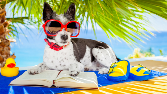 summer-reading-dog.png