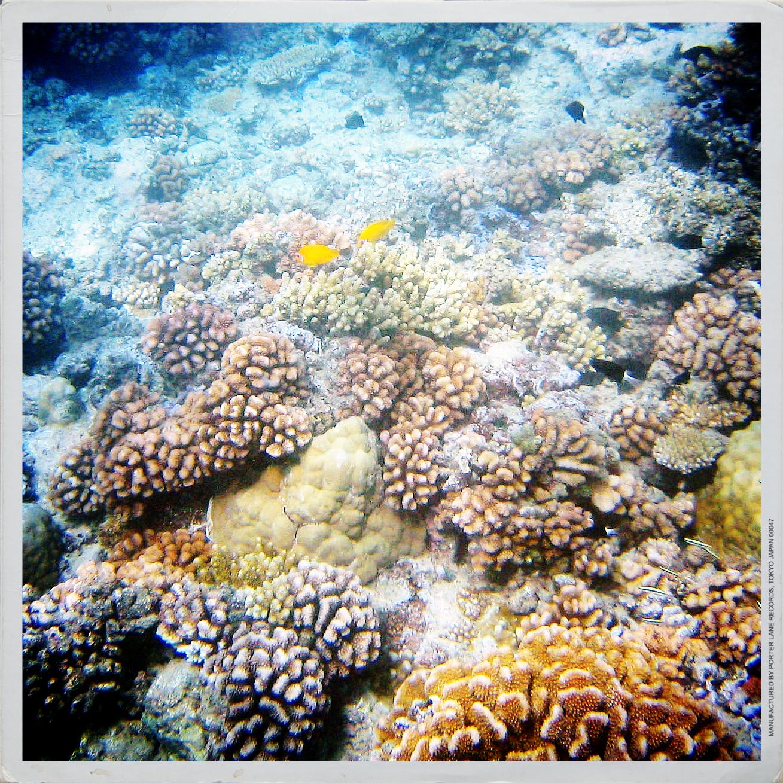 coral.jpg