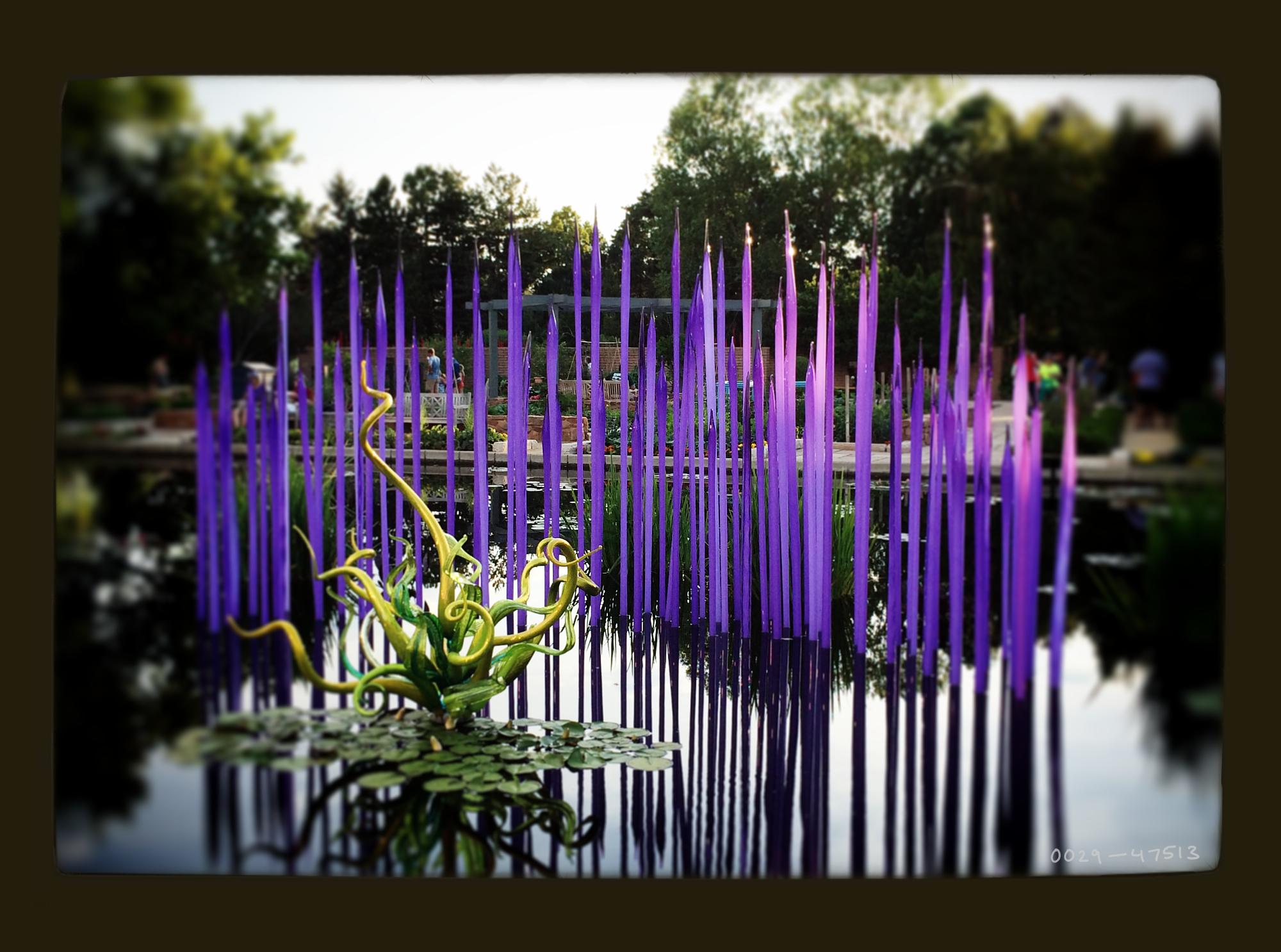 "Dale Chihuly, ""Neodymium Reeds"" at the Denver Botanic Gardens through Nov. 30, 2014."
