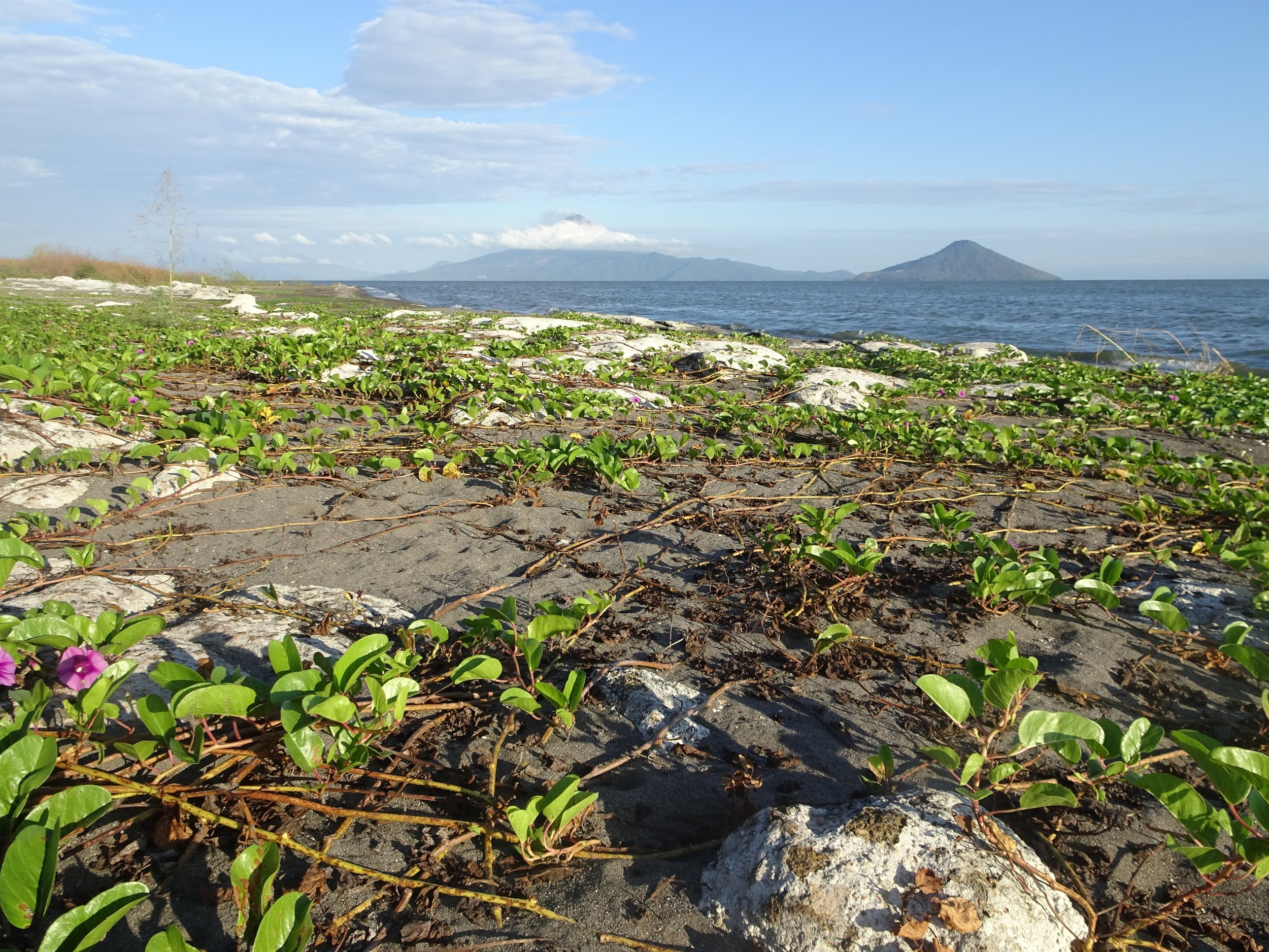 A volcanic view along the shores of Lake Managua (Lake Xolotlán) en route to the city of León.   Photo by Heather Mundt.