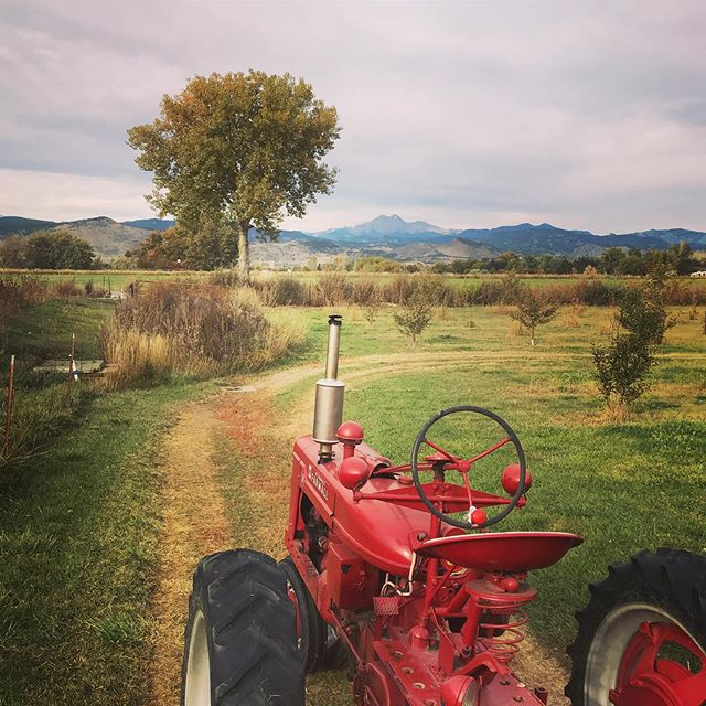Our morning view on today's Fall & Farm Tour with @visitlongmontcolorado at @ya_ya_farm_and_orchard_. It also included at stop @sunflowerfarm_info and then a #cheesemaking class @theartofcheeselongmont. Thanks, @brewhoptrolley for the ride! Proud to participate in a media trip in my own hometown! #agritourism #visitlongmont #visitlongmontcolorado #fallandfarms