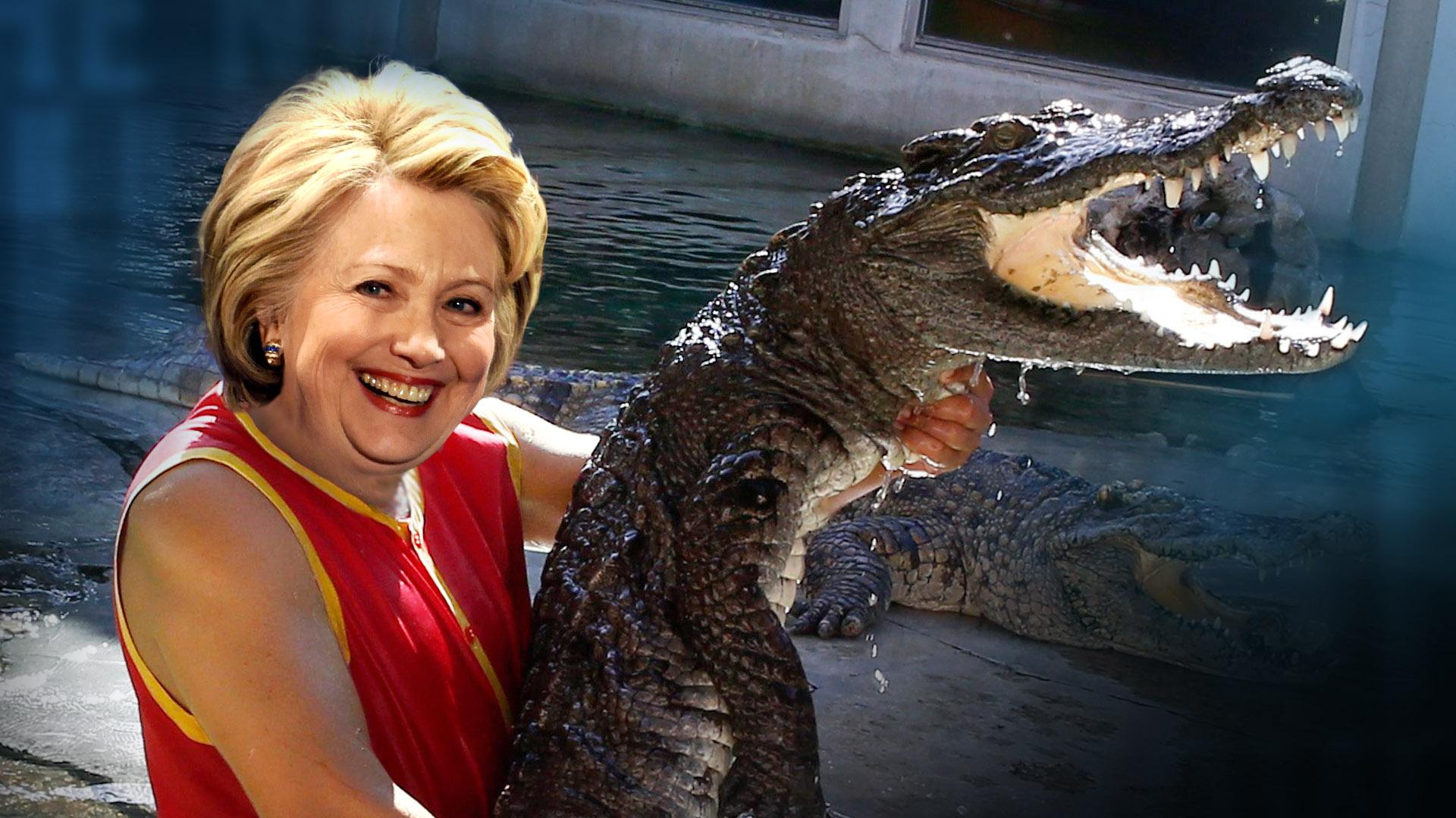 HillaryGator.jpg