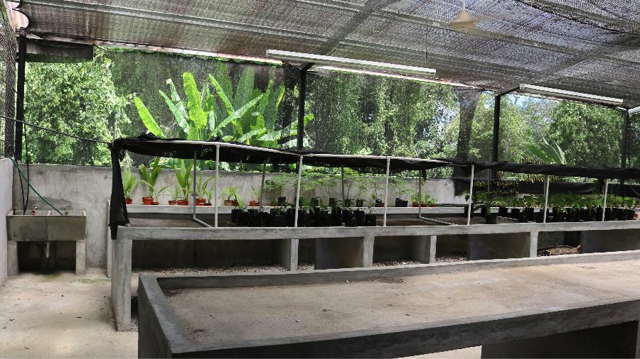 The greenhouse where Olmedo did his thesis research in medicinal native plants.
