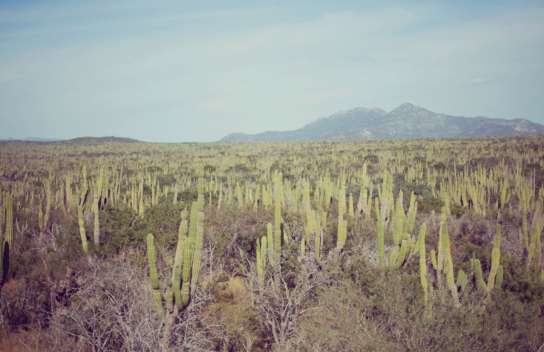 TravelPhotographer_TravelEditorial_Mexico_By_BriJohnson_0029.jpg