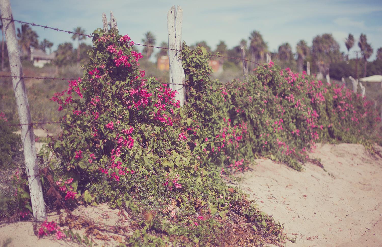 TravelPhotographer_TravelEditorial_Mexico_By_BriJohnson_0048.jpg