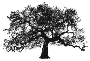urban_oak_logo_tree_only copy smaller.png