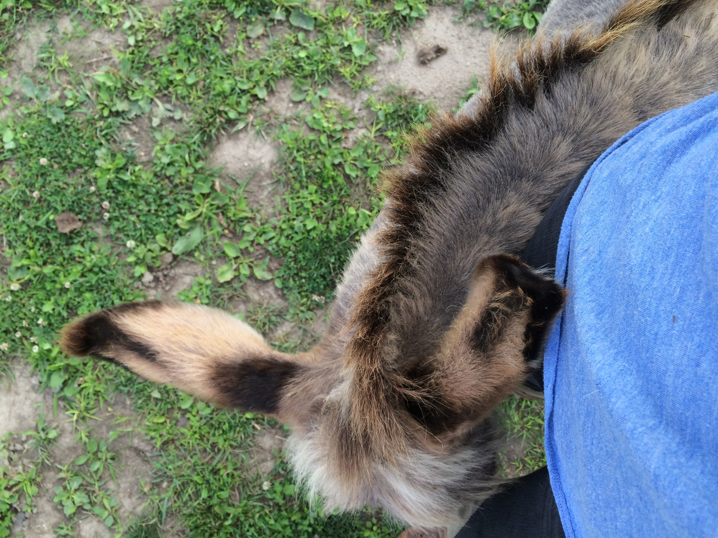 Lil' John wrapped around my leg. Reportedly, he was a standoffish donkey. Hard to imagine!