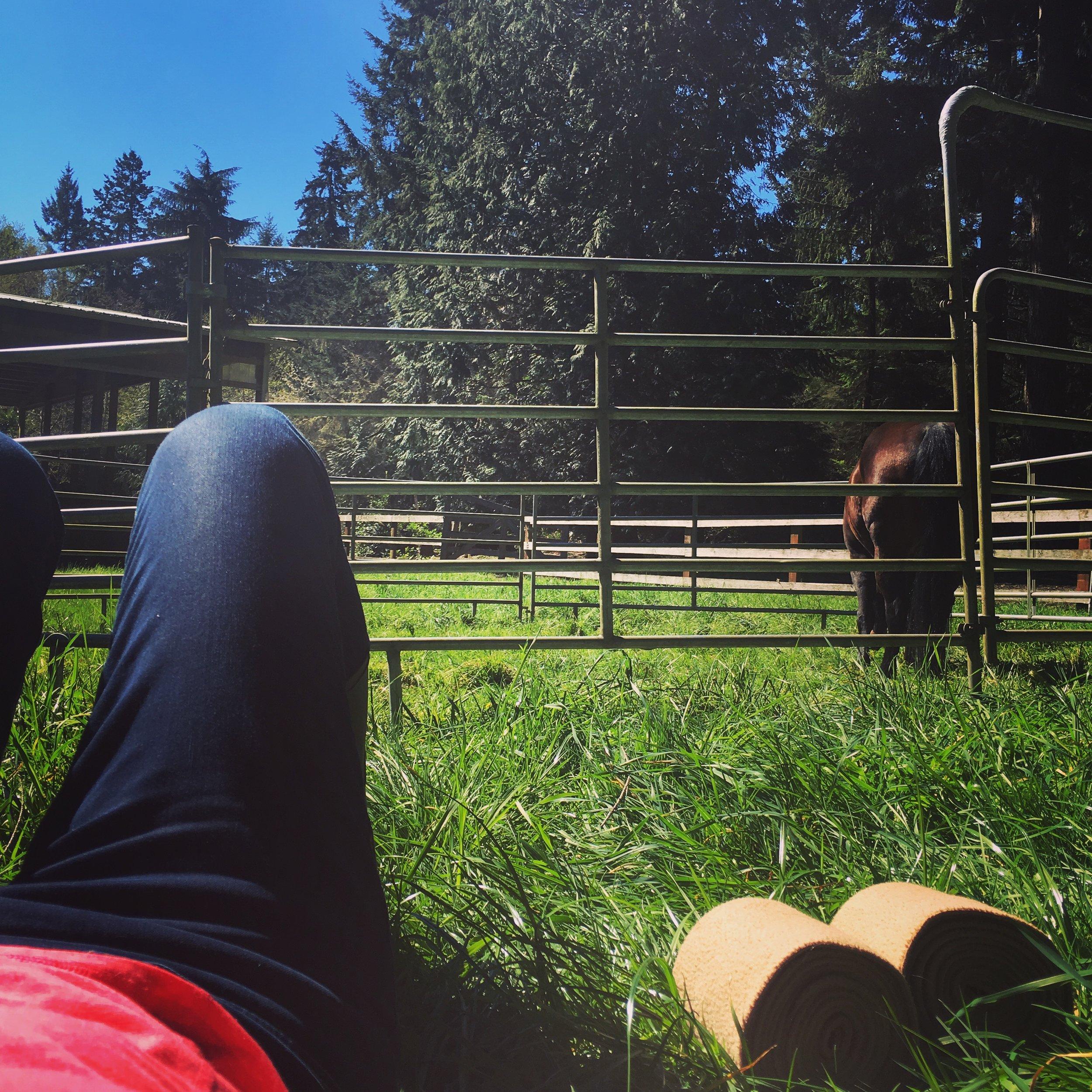 Enjoying the spring sunshine and green grass.
