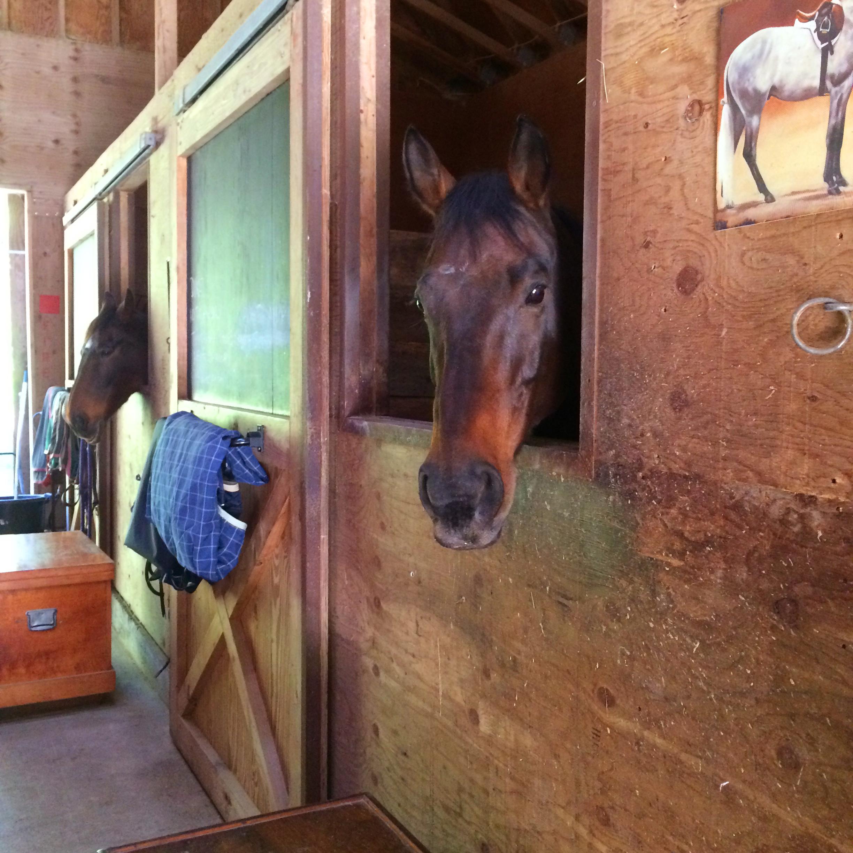 Duke beginning stall rest at Paxhia Farm.