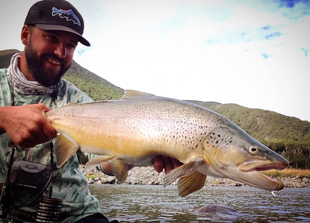 Giant New Zealand brown trout fly fishing