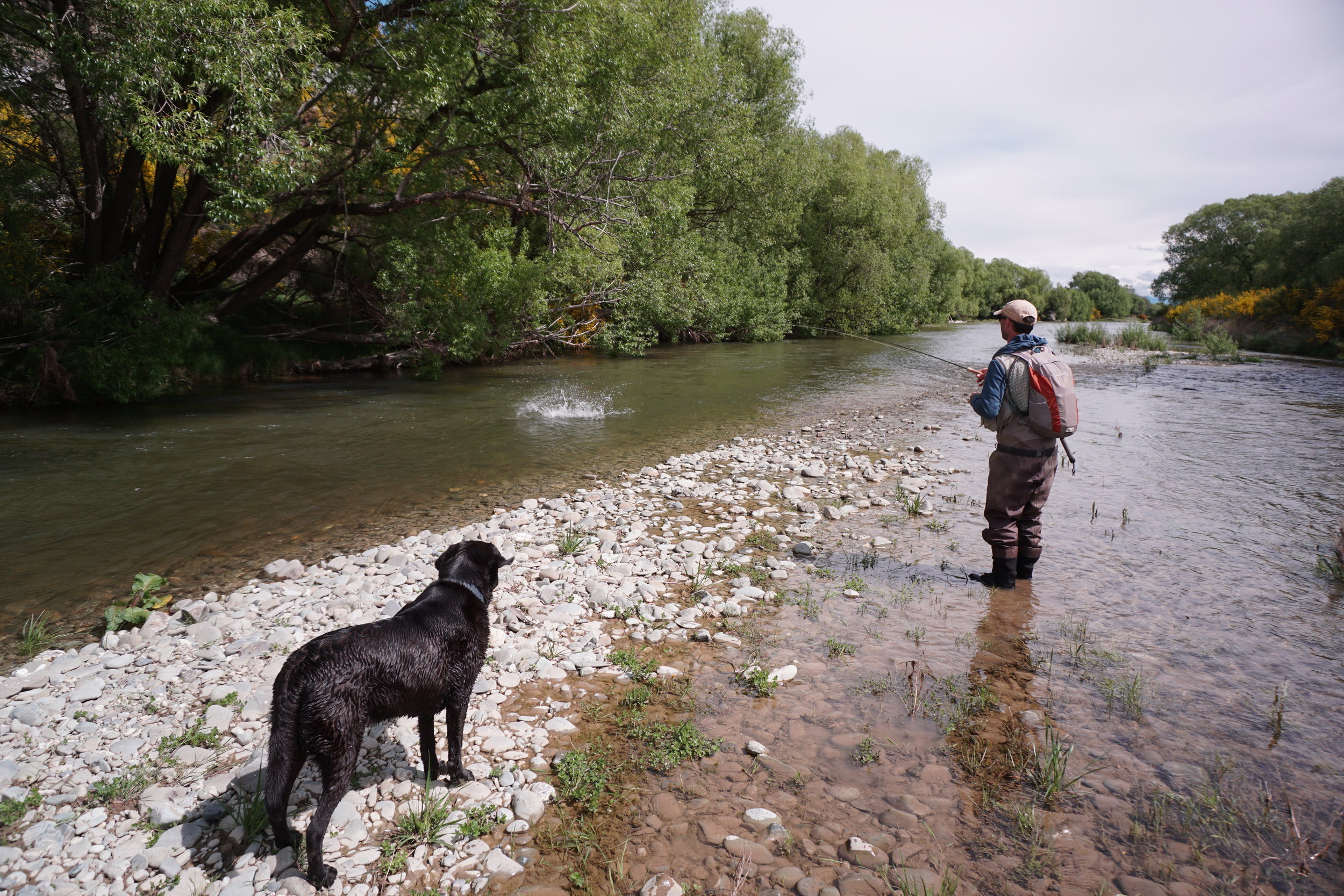 Dogs that fly fish