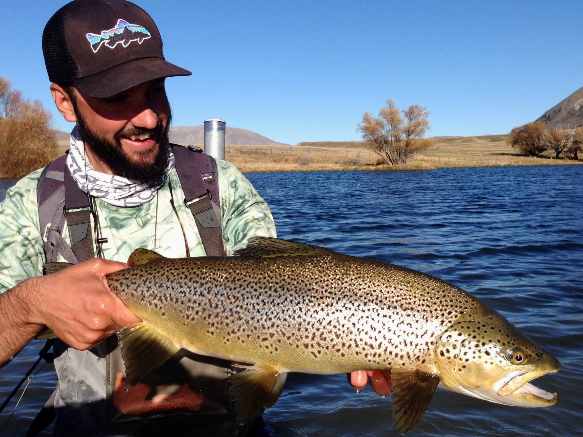 Giant New Zealand brown trout