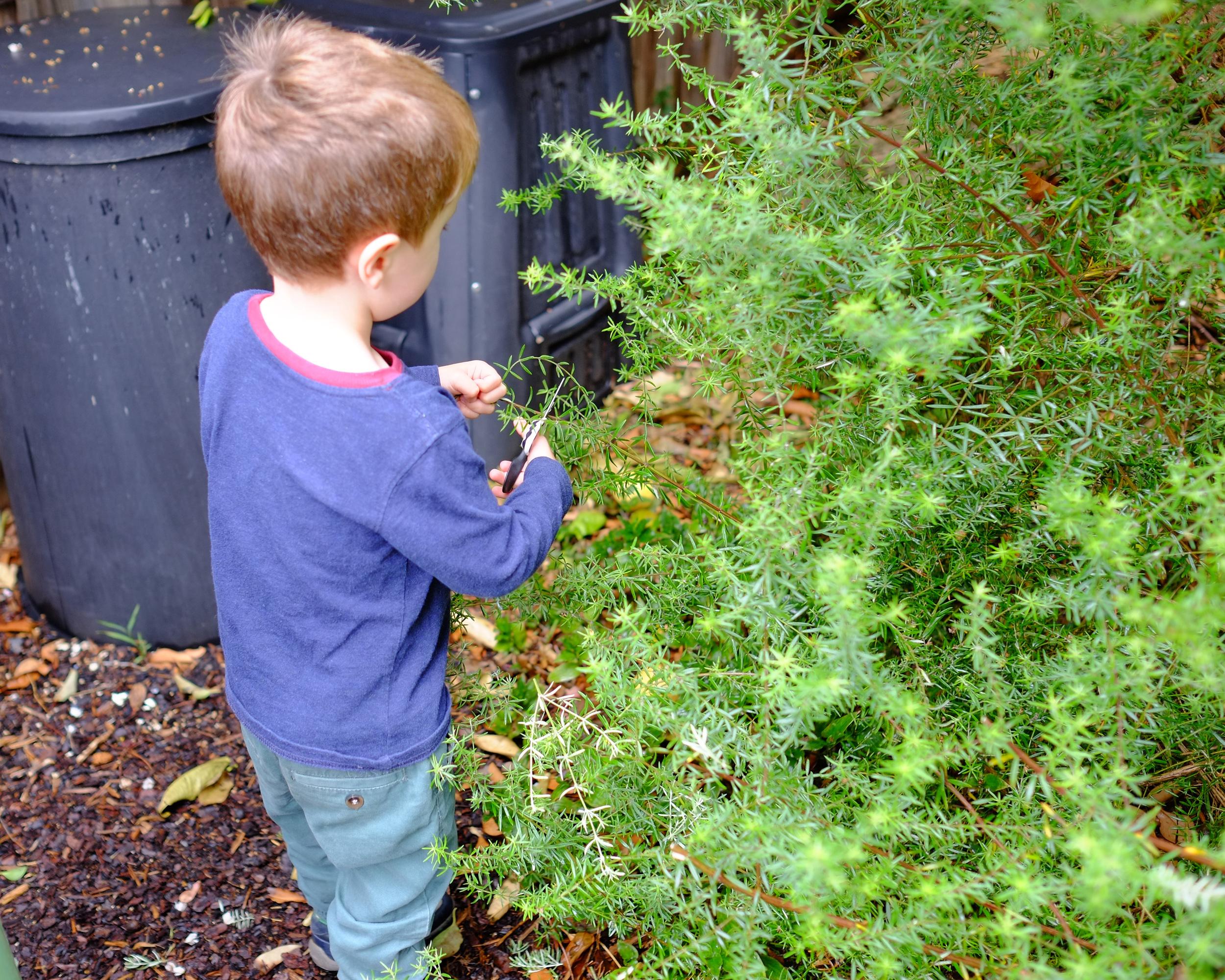 snipping garden plants