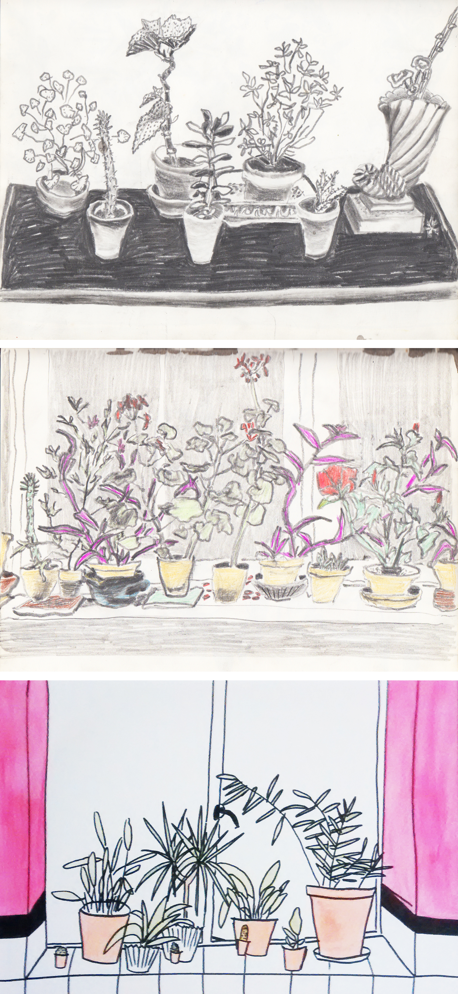 """Top: Two pages of pot plants from my 1983 sketchbook  Bottom: """"Bathroom Window""""watercolour by Augusta Ward, 2015"""