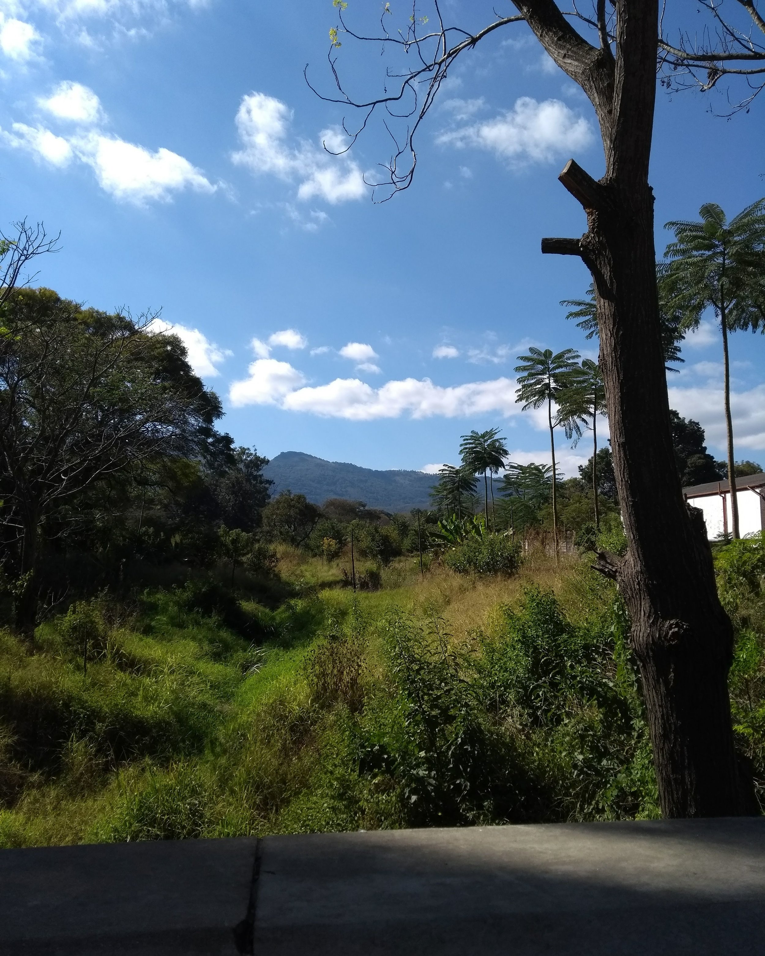 View from a bridge on our lunchtime walk into Mutare