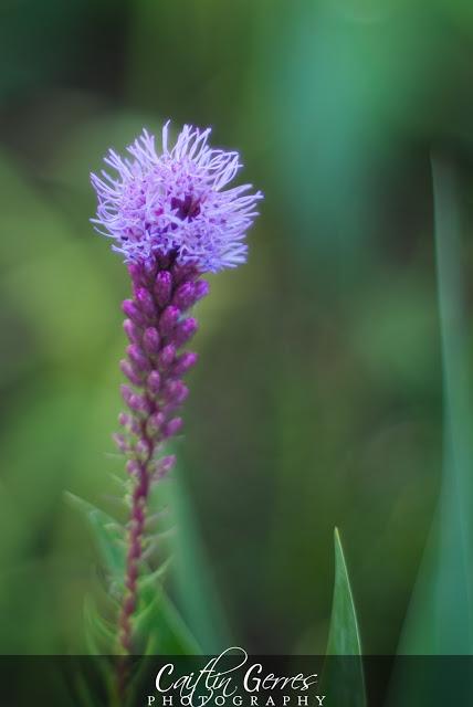 Flower-67-w.jpg