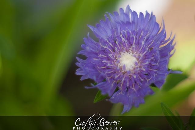 Flower-26-w.jpg