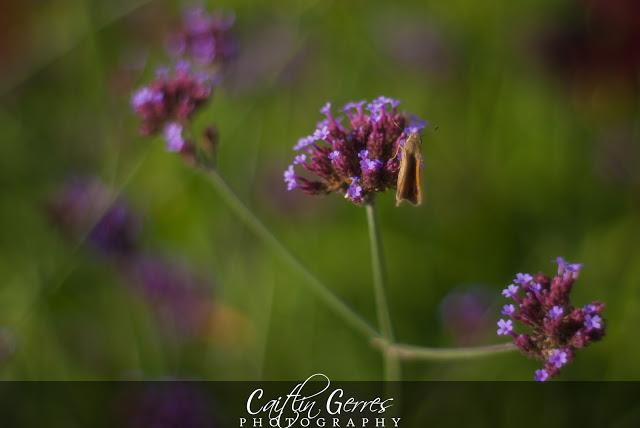 Flower-35-w.jpg