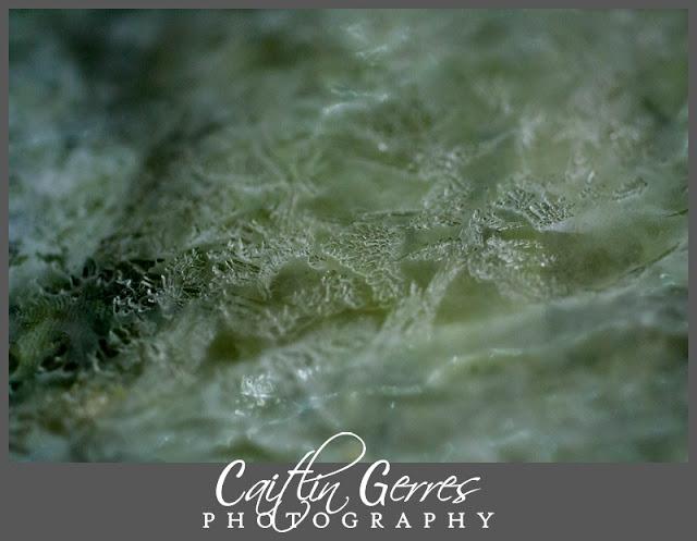 Cold+Ice+Photo-101_DSK.jpg