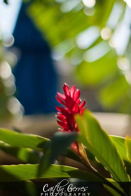 Jamaica+2012-275w.jpg
