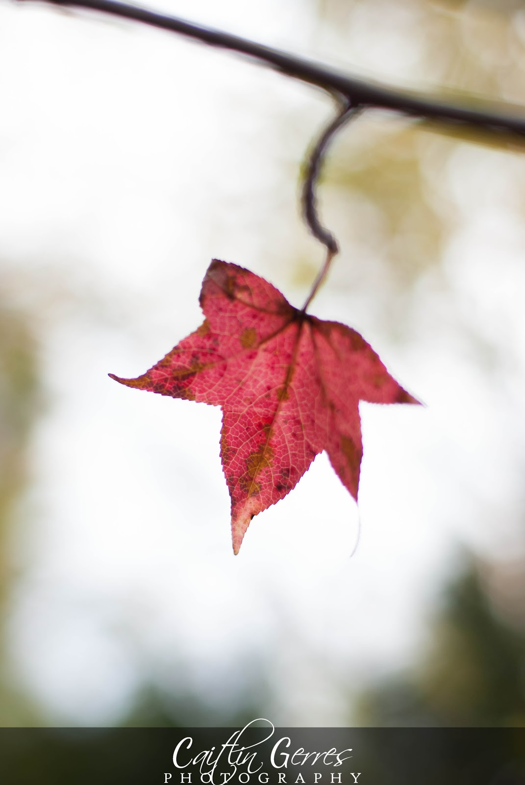 Fall+2012-32w.jpg