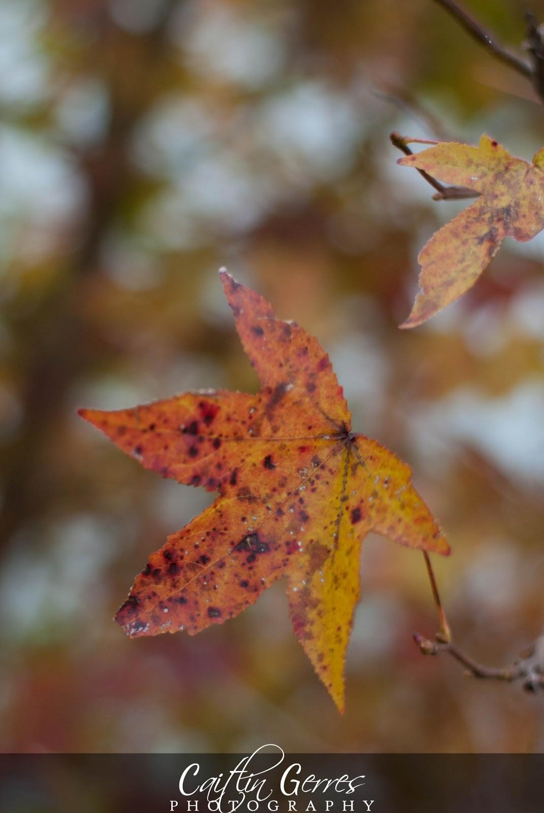 Fall+2012-15w.jpg