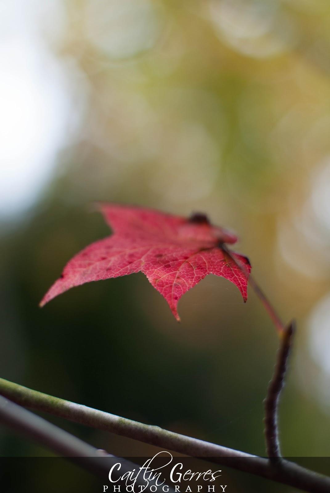 Fall+2012-30w.jpg