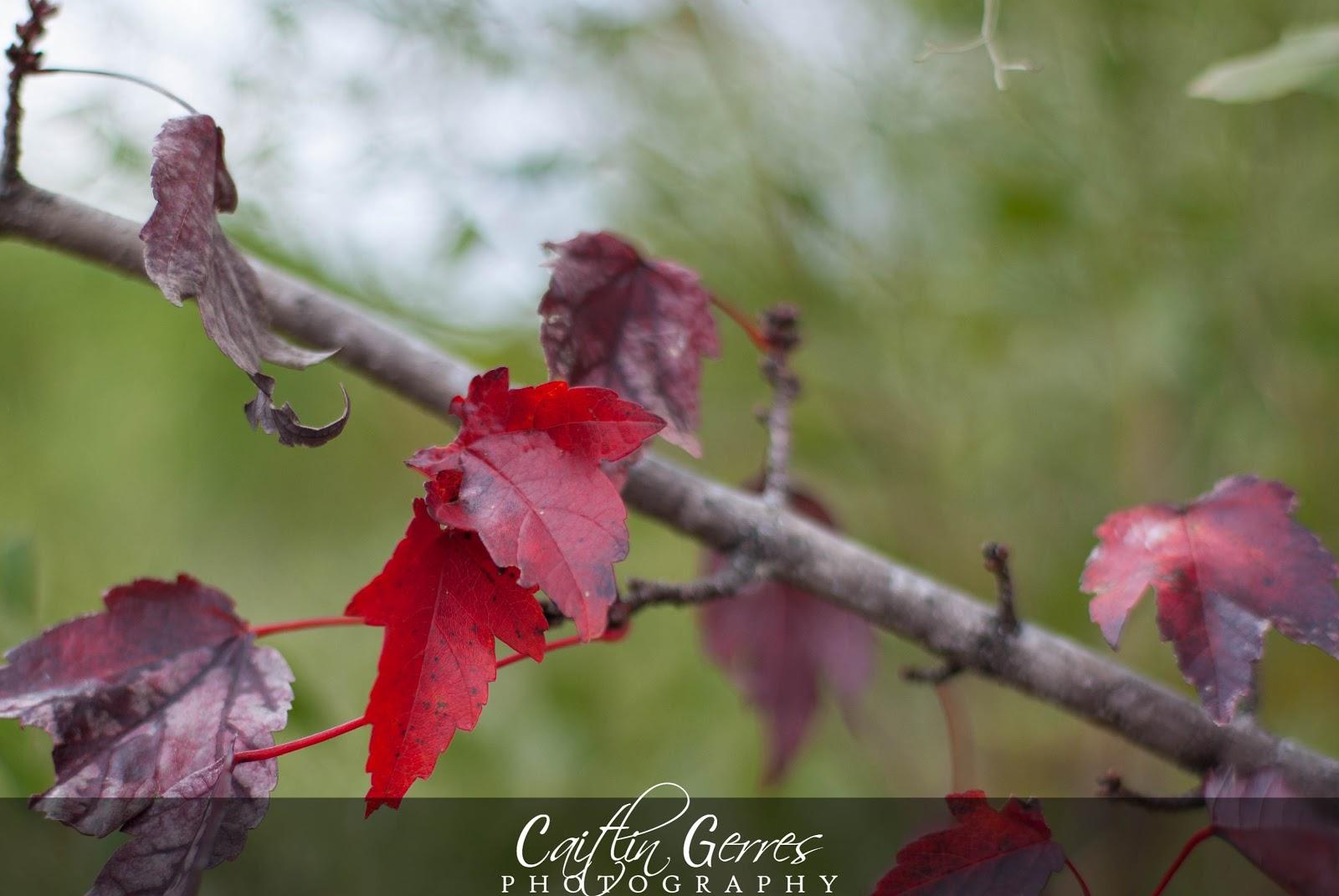 Fall+2012-22w.jpg
