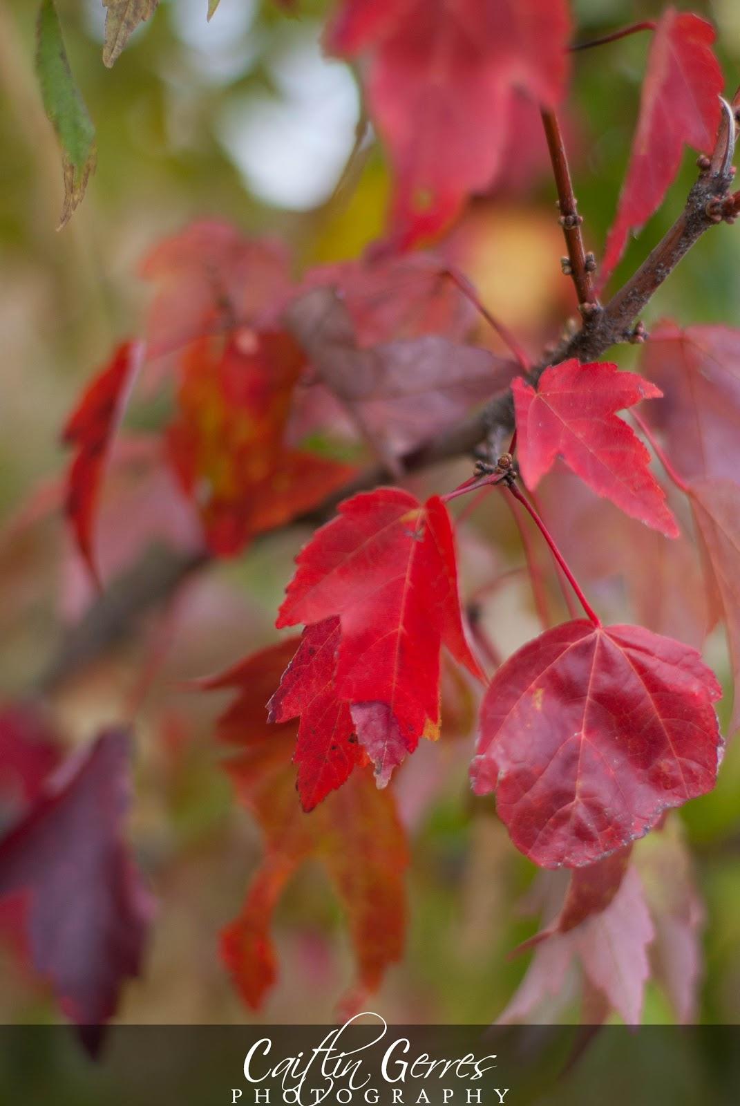Fall+2012-11w.jpg