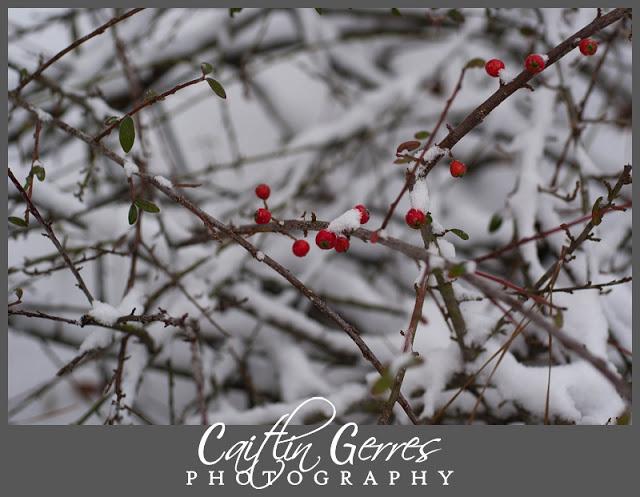 Snow+Photo+Walk-23_LPT.jpg